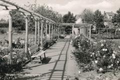 rosengarten-7