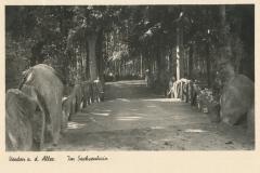 sachsenhain-16